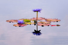 Kathy-Snead A-Water-Garden-Miscrunup1218