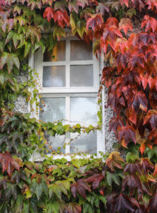 TinaDisOrbio Ireland-fall-window-L2runup1018