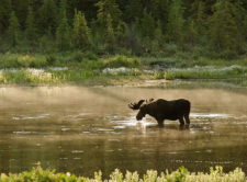 Doug Holling-moose