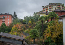Tom Goldberg-Locarno backyards