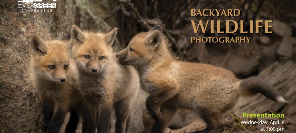 Backyard Wildlife Photography with Ellen Nelson