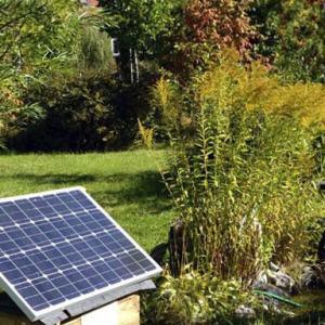 EverGreenCoin Harnessing Solar