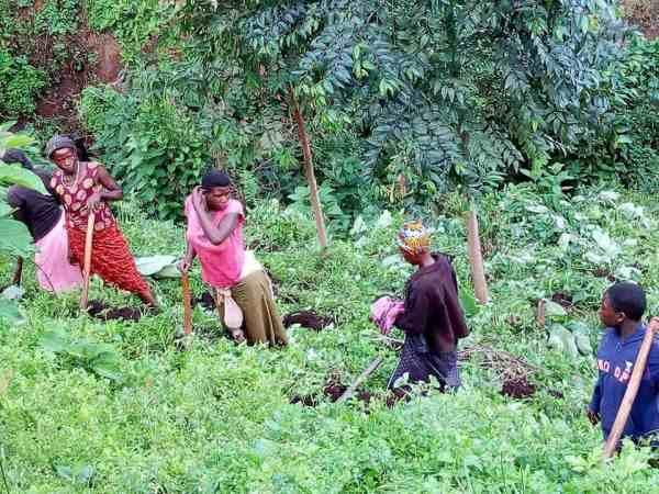 Greening Urganda with EverGreenCoin Planting Started