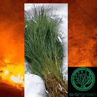 EGC CA tree fire relief