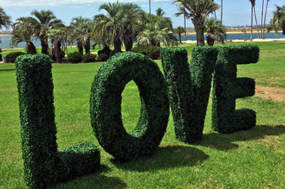 Boxwood Hedge Letters