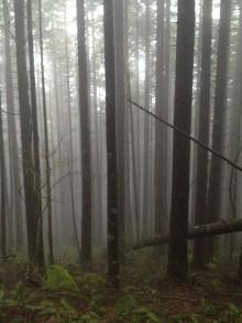Nick Eaton Trail in the fog