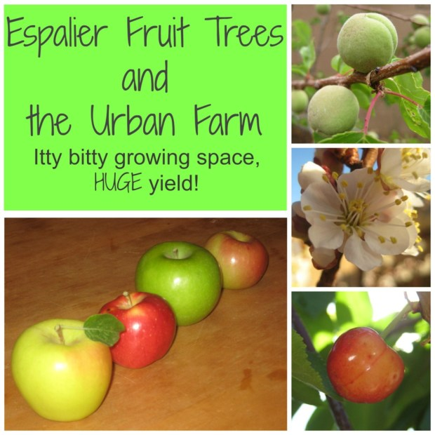 Espalier Trees & the Urban Farm