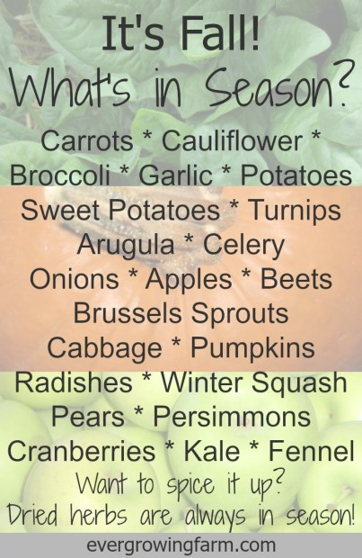 What's in Season - Fall ::: Ever Growing Farm