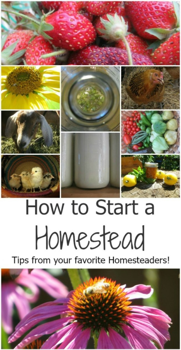 How to start your homestead - Tips from your favorite homesteaders!
