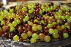 grapes ready to become raisins