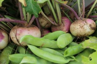snap peas and turnips