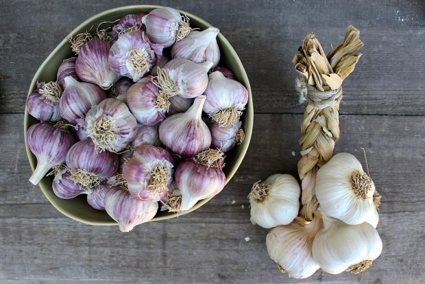 2016 garlic