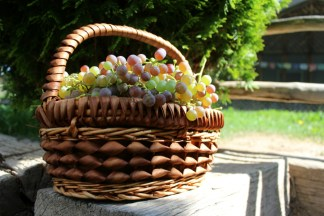 harvested white grapes