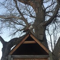 duck-on-the-treehouse