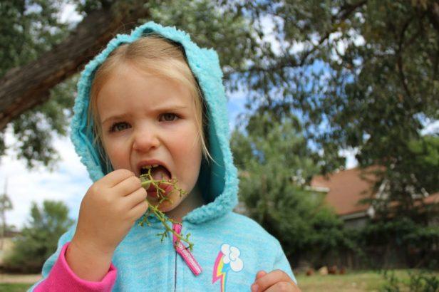 Ember eating grapes