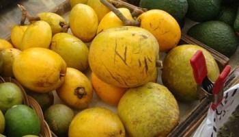 egg fruit-hawaii