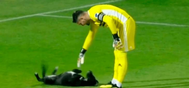 Perro invade el campo y exige que el portero le dé un masaje en la panza