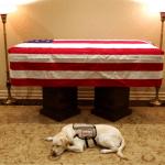 Screenshot_2018-12-12-12-51-01-148_com.miui_.gallery-150x150 El perro de Bush le rinde tributo frente a su ataúd
