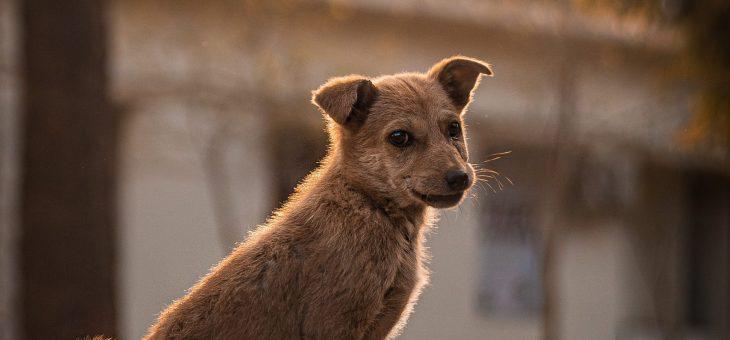 Cómo saludar a un perro desconocido