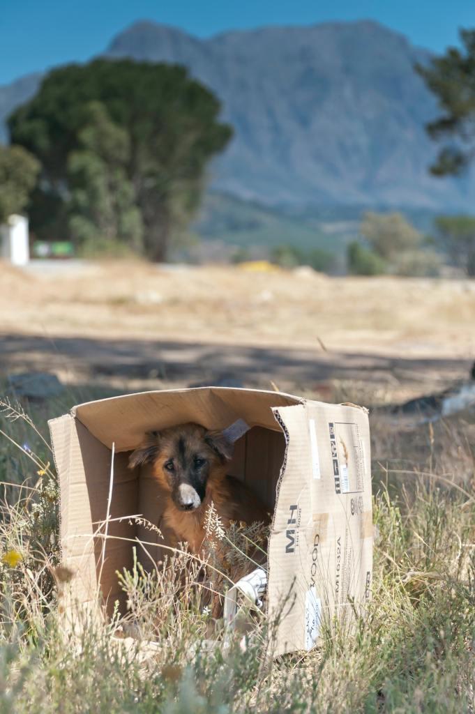 pexels-kenneth-2836734-681x1024 En España se abandonan 15 perros sin microchip cada hora.