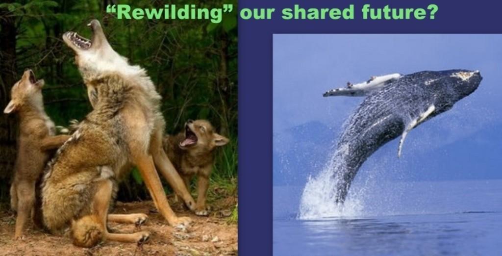Rewilding-thumbnail1-1024x522