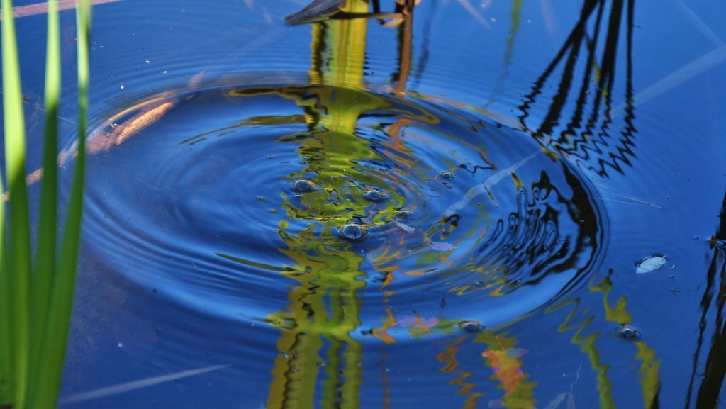 Image: Blue sky reflected in a pond after a pebble is tossed creating ever widening circles