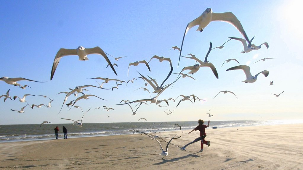 Image: Child running on beach with Seagulls flying all around