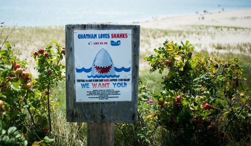 Image: Sign for we love sharks