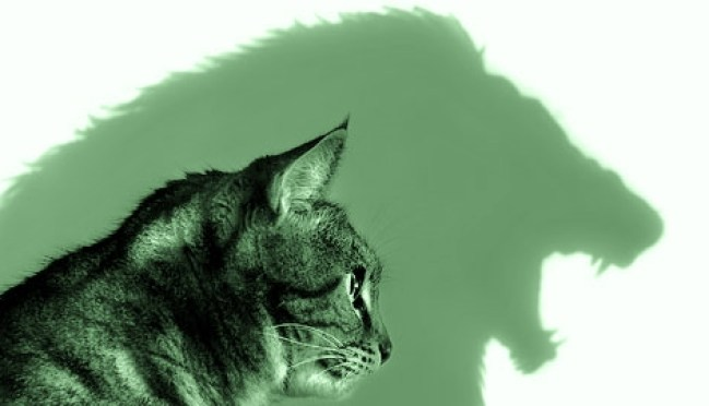 """Image: Cat Lion mindset, when you look in the mirror, are you a""""glass half full"""" person?"""