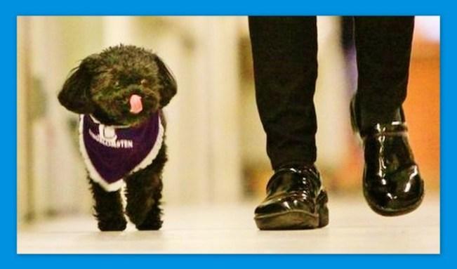 Image: Nala the working, comfort dog