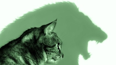 Image: Illustration of cat before lion silhouette