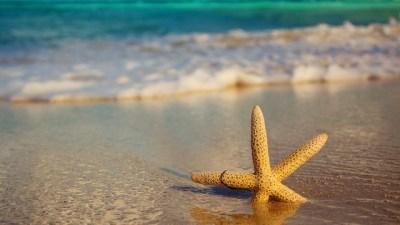 Image: Starfish embedded in beach sand