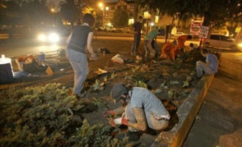 Image: Midnight mission for guerrilla gardeners. Planting in the dark only lit by street lamps