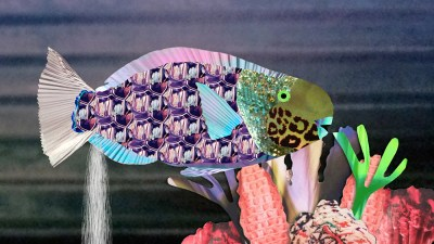 Image: Gross science collage parrot fish