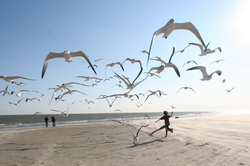 Image: Little boy running on the beach with a flock of seagulls around him