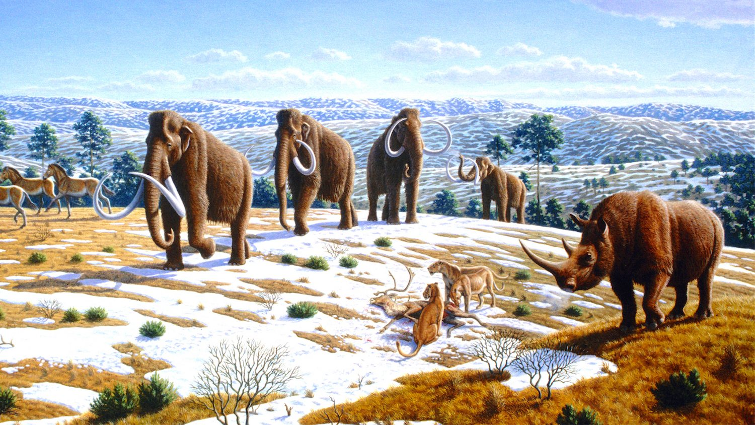 Image: Mammoth, Wooly Rhino and Saber Tooth Cat illustration