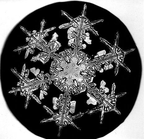 Snowflake Bentley Snowflake 2