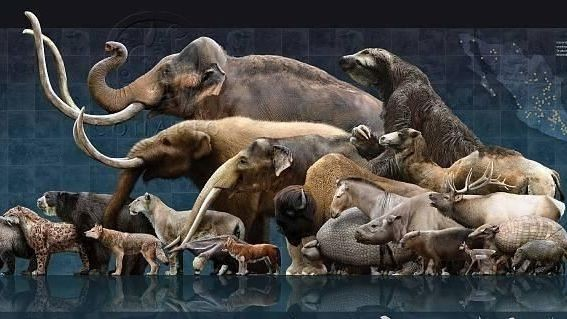 Image: Rewilding with Megafauna from North America