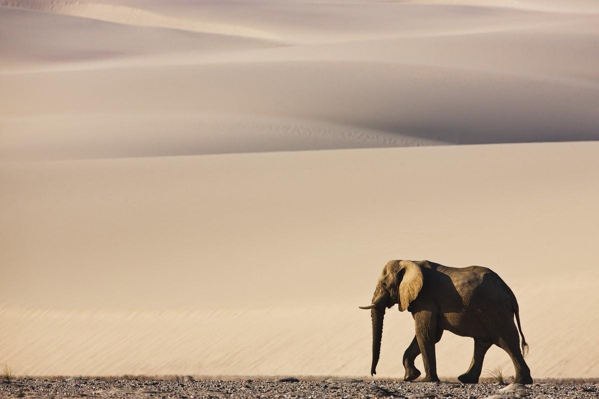 Image: Theo Allofs' lone elephant on the dune Namibia