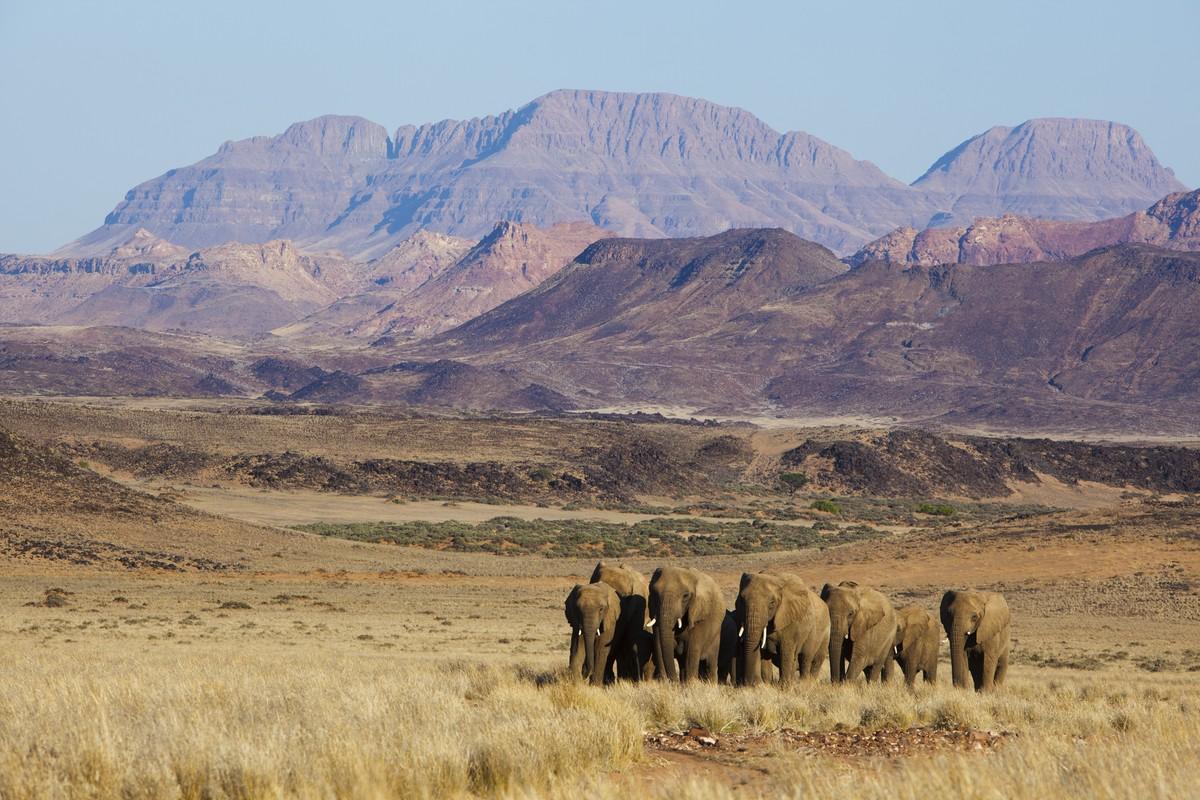 Image: Theo Allofs heard of elephants namibia
