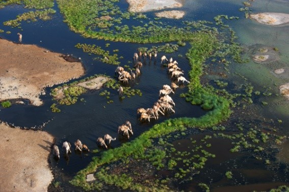 Image: Camels at a watering hole from above