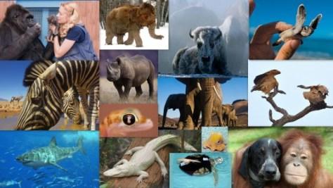 Collage ANIMALS no text