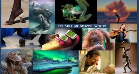 Image: Collage of EWC pics