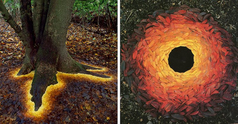 Image: the work of environmental artist Andy Goldsworthy. Vibrantly colored fall leaves artfully arranged around a tree trunk and in a perfect circle