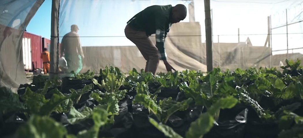 Image: Lufefe Nomjana, the Spinach King tending his plants in a green house