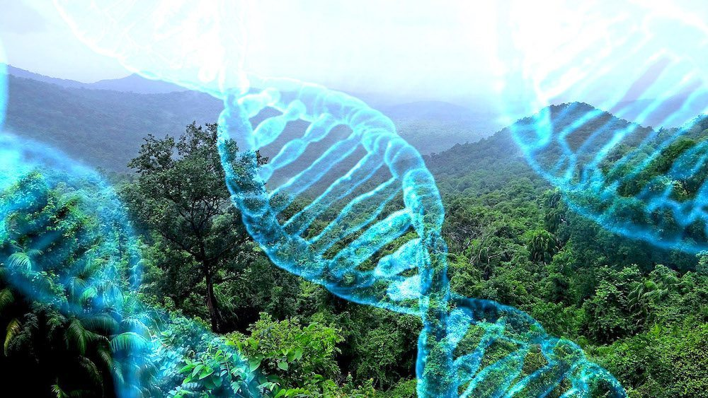 Image: DNA over a view of the rainforest