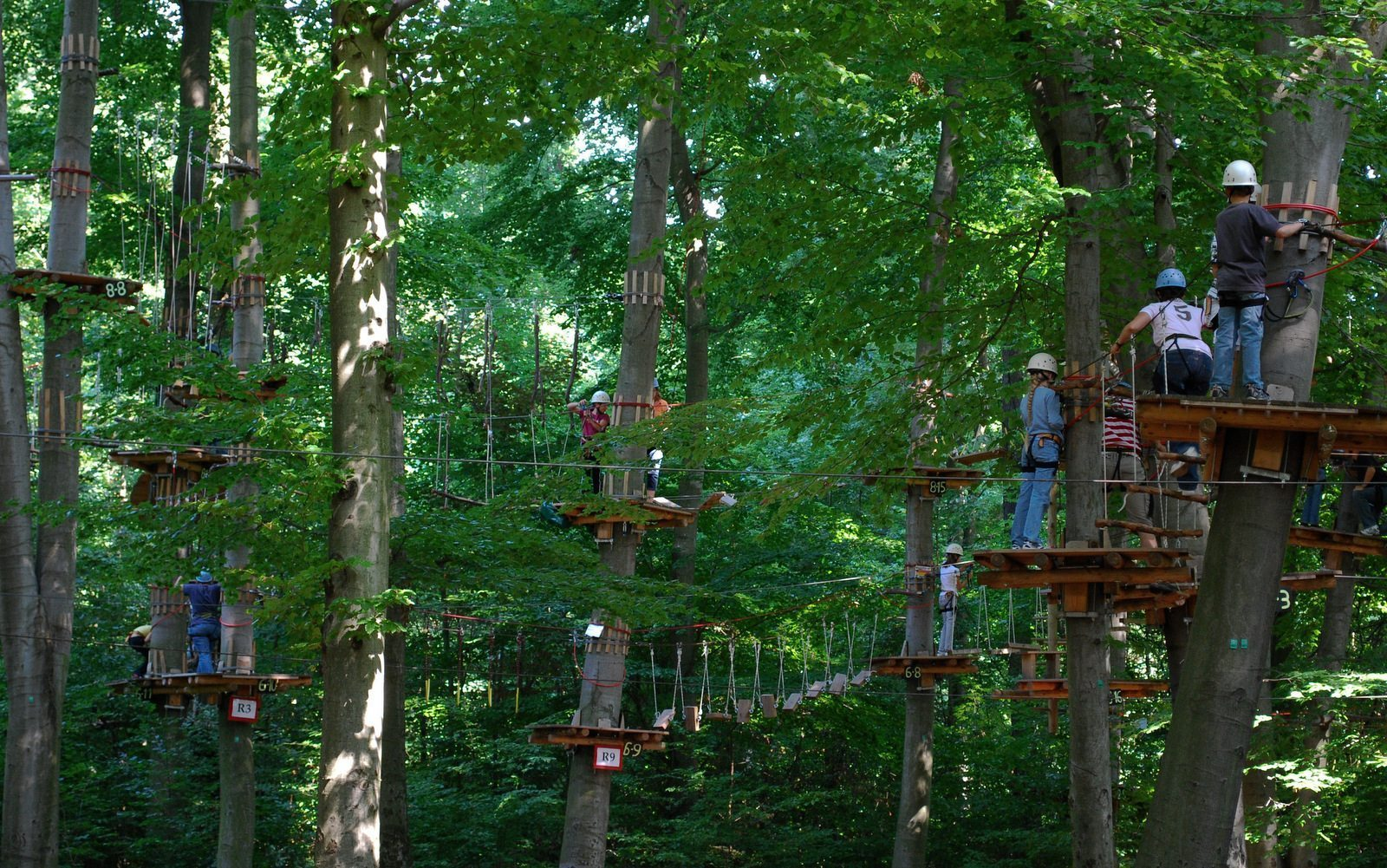 Image: People climbing in tree in a ropes course