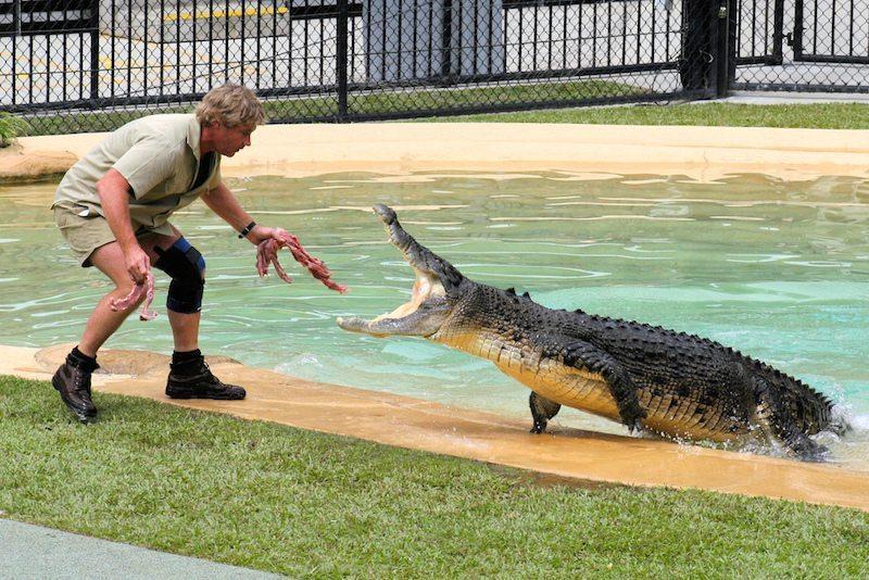 Image: Steve Irwin, the Crocodile Hunter, feeding a crocodile lunging at him