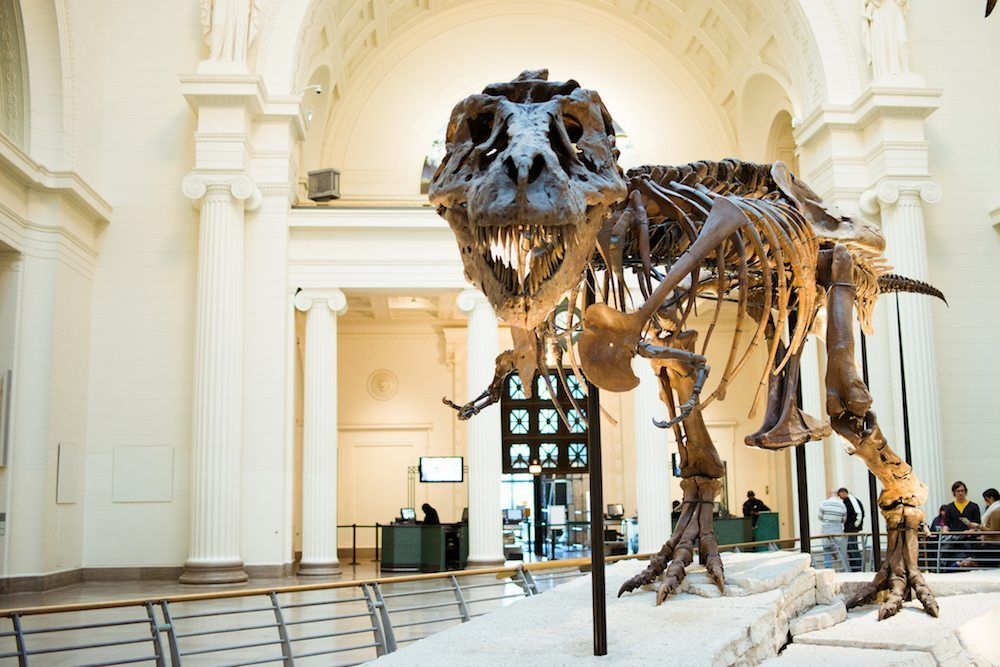 Image: Sue the dinosaur, a t-rex skeleton, at the Field Museum where The Brain Scoop is filmed