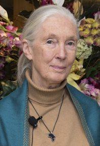 Image: Dr. Jane Goodall